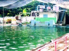 Kolam renang Comal Baru (foto : g-news)